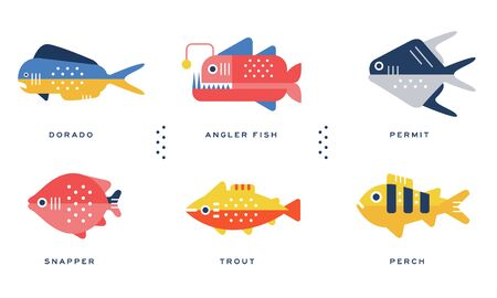 Sea and Ocean Fishes Collection, Dorado, Angler Fish, Permit, Snapper, Trout, Perch Vector Illustration