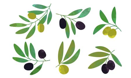 Tree Branches with Green and Black Olives Collection, Healthy Organic Product Vector Illustration Ilustracja