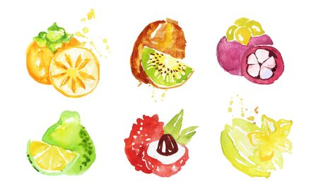 Juicy Ripe Tropical Fruit Collection, Persimmon, Mangosteen, Kiwi, Pomelo, Lychee, Carambola Watercolor Hand Painting Vector Illustration