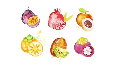 Juicy Ripe Tropical Fruit Collection, Persimmon, Chrysophyllum, Pomegranate, Mangosteen, Peach, Kiwi Watercolor Hand Painting Vector Illustration on White Background.