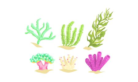 Seaweeds Collection, Aquatic Marine Algae, Underwater Ocean or Sea Plants Vector Illustration Illustration
