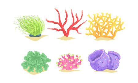 Seaweeds Collection, Aquatic Marine Algae Underwater Plants Vector Illustration