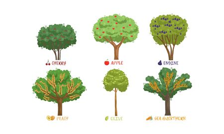 Different Garden Berry Shrubs and Fruit Trees Sorts with Names Collection, Cherry, Apple, Peach, Buckthorn Vector Illustration on White Background.