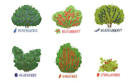 Différents types d'arbustes de baies de jardin et d'arbres fruitiers avec collection de noms, fraise, groseille, myrtille, cassis, mûre, épine-vinette Vector Illustration