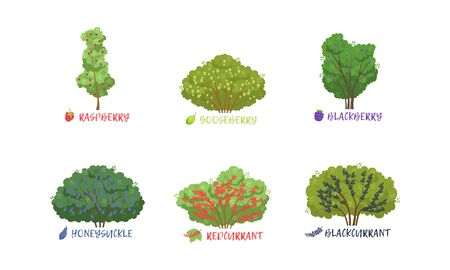 Different Garden Berry Shrubs and Fruit Trees Sorts with Names Collection, Gooseberry, Redcurrant, Blackberry, Honeysuckle, Raspberry, Blackcurrant Vector Illustration