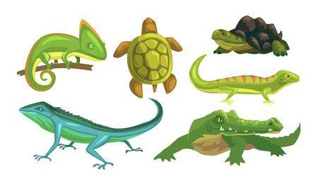 Amphibian Animals Species Collection, Turtle, Chameleon, Lizard, Crocodile, Salamander Vector Illustration Ilustración de vector