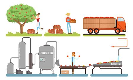 Juice Production Process, Apples Harvesting, Washing, Sorting, Crushing Automated Line Vector Illustration