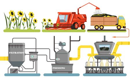 Sunflower Oil Production Process, Harvesting, Filtration, Pressing Automated Line Vector Illustration