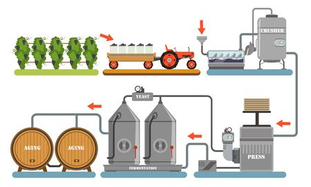 Wine Production Process, Alcoholic Beverages Making Equipment, Grapes Harvesting, Crushing, Pressing, Fermentation, Aging Vector Illustration