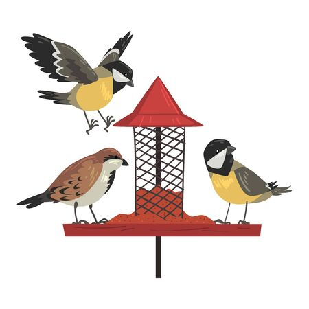 Winter Bird Feeder with Cute Titmouses and Sparrows, Northern Birds Feeding by Seeds in Wooden Feeder Vector Illustration