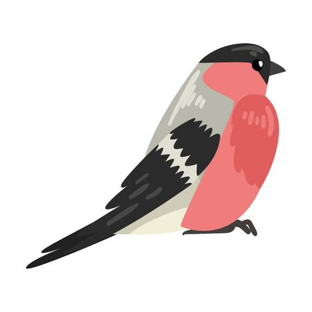 Cute Bullfinch Winter Bird, Beautiful Northern Birdie Vector Illustration on White Background.