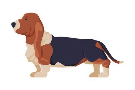 Basset Hound Purebred Dog, Pet Animal, Side View Vector Illustration