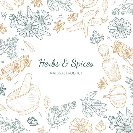 Herbs and Spices Banner Template with Natural Organic Healthy Products Seamless Pattern Hand Drawn Vector Illustration