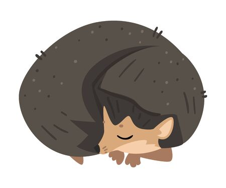 Cute Hedgehog Sleeping Curled Up, Lovely Wild Forest Animal Cartoon Character Vector Illustration Ilustrace