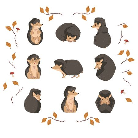 Cute Little Hedgehog Collection, Lovely Wild Forest Animal Cartoon Character in Various Poses Vector Illustration Ilustrace