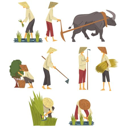Asian Farmers in Straw Conical Hats Working on Field, Peasants Characters Planting and Harvesting Rice, Picking up Tea Leaves Cartoon Style Vector Illustration Vector Illustration