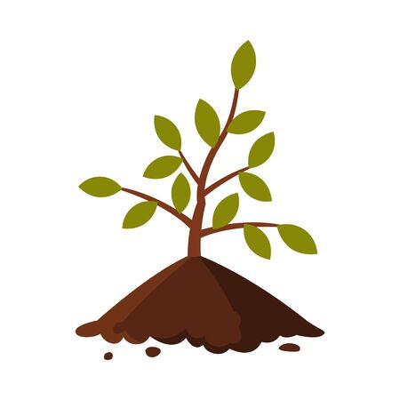 Young Tree Sapling in the Ground Flat Style Vector Illustration on White Background