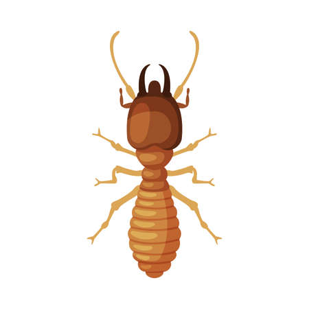 Termite Harmful Insect, Pest Control and Extermination Concept Vector Illustration on White Background