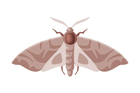 Clothes Moth Winged Insect, Pest Control and Extermination Concept Vector Illustration on White Background