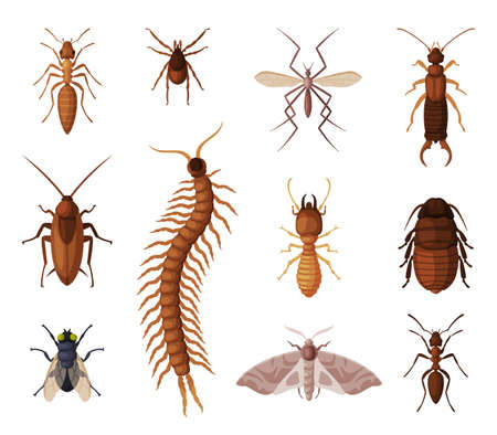 Harmful Insects Set, Centipede, Moth, Diplura, Ant, Mite, Tick, Cockroach, Fly, Pest Control and Extermination Concept Vector Illustration Isolated on White Background. Vettoriali