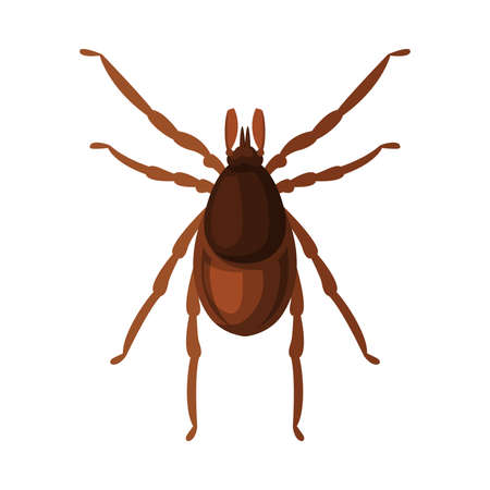 Mite Tick Insect, Pest Control and Extermination Concept Vector Illustration Isolated on White Background.