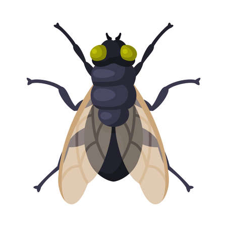 Fly Insect, Pest Control and Extermination Concept Vector Illustration Isolated on White Background.