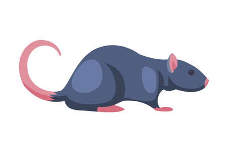 Rat Pest Animal, Home Parasite Vector Illustration Isolated on White Background.