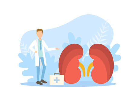 Tiny Doctors Examining Huge Kidneys, Doctor Doing Medical Research Vector Illustration