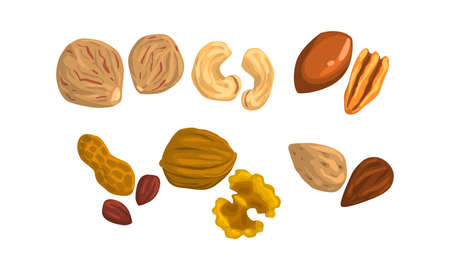 Different Kind of Nuts Set, Cashew, Pecan, Nutmeg, Peanut, Walnut, Almond Cartoon Style Vector Illustration