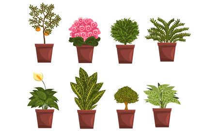 Indoor House Plants in Brown Pots Set, Home Interior Decoration Design Vector Illustration on White Background. Vektorgrafik