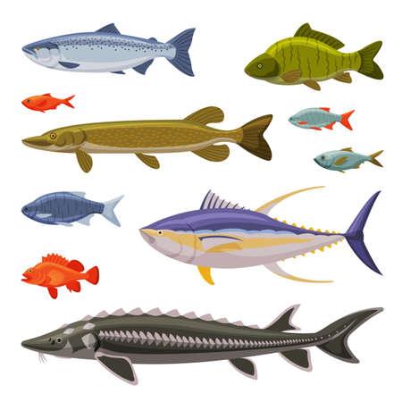 Saltwater and Freshwater Fishes Set, Fresh Aquatic Fish Species Cartoon Illustration Vecteurs