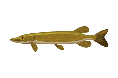 Pike Freshwater Fish, Fresh Aquatic Fish Species Cartoon Vector Illustration