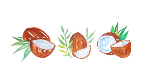 Watercolor Coconut with Palm Leaves Vector Composition Set