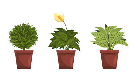 House Plants Collection, Green Potted Plants for Interior Decoration Flat Vector Illustration