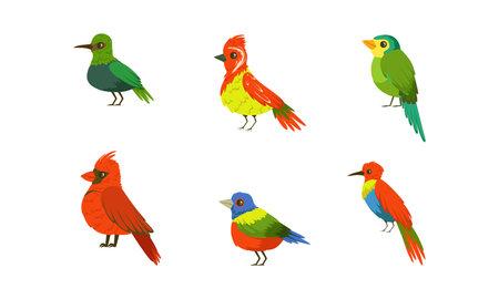 Tropical Parrots Collection, Beautiful Bright Exotic Birds Cartoon Vector Illustration