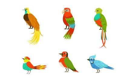 Tropical Exotic Birds Collection, Beautiful Bright Parrots Cartoon Vector Illustration