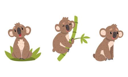 Cute Koalas Set, Lovely Australian Animal in Different Poses Vector Illustration