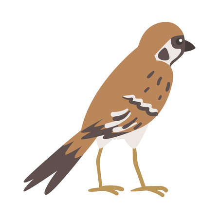 Sparrow as Brown and Grey Small Passerine Bird with Short Tail Standing Vector Illustration