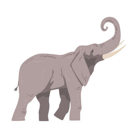 Walking Elephant as Large African Animal with Trunk, Tusks, Ear Flaps and Massive Legs Side View Vector Illustration Ilustracje wektorowe