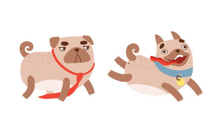 Funny Pug Dog with Curled Tail and Light Brown Coat Running with Stick Out Tongue Vector Set
