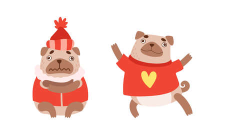 Funny Pug Dog with Curled Tail and Light Brown Coat in Warm Winter Clothing Vector Set