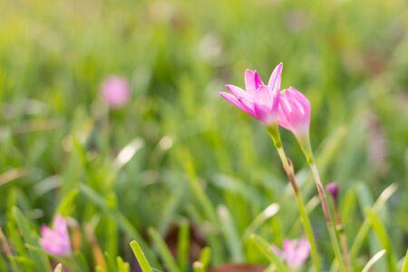flowers Stock Photo - 17276037
