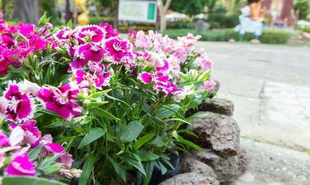 sylvan: Beautiful garden flowers and sylvan
