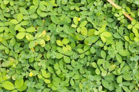 green bush bright in the garden photo