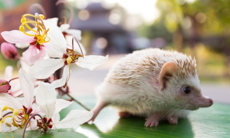 hedgehogs with beautiful flowers on table