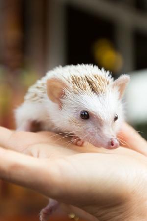 hedgehog is on a hand photo