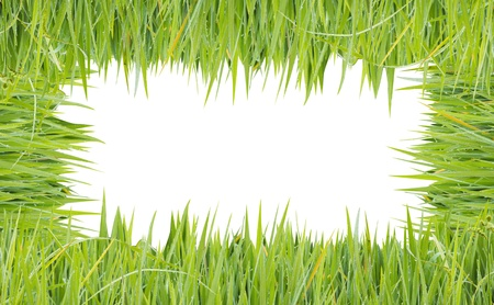 texture image is grass green color Stock Photo - 20282919