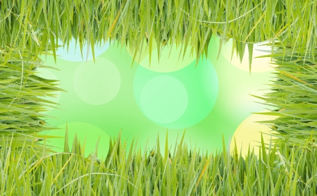 texture image is grass green color Stock Photo - 20282953
