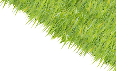 texture image is grass green color  Stock Photo - 20282899