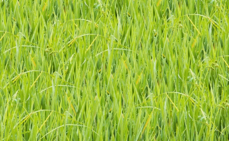 texture image is grass green color Stock Photo - 20283902